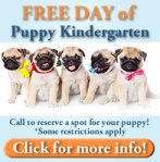 Free Puppy Kindergarten Day