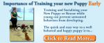 Kathy's Dog Daycare & Training