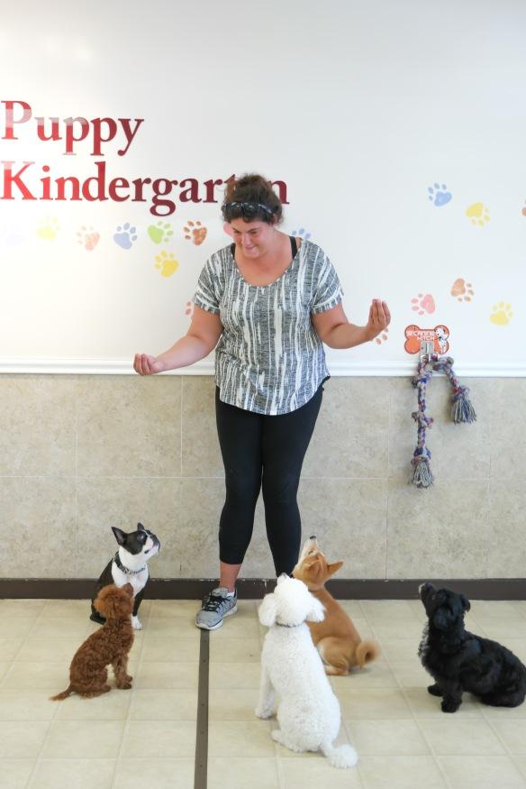 Torrance Dog Training / Doggie Daycare / Puppy Kindergarten